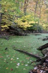 pond w/ algae